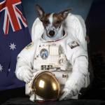 photo for First Dog on the Moon